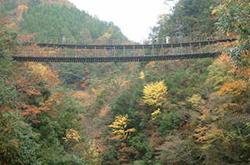 樅木(もみぎ)の吊橋